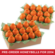 HoneyBells All-Time Favorite