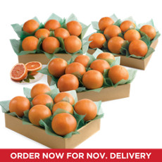 Crown Ruby Red Grapefruit Grand Family Size