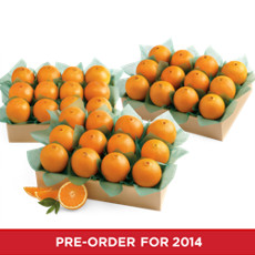 Navel Oranges Family Size