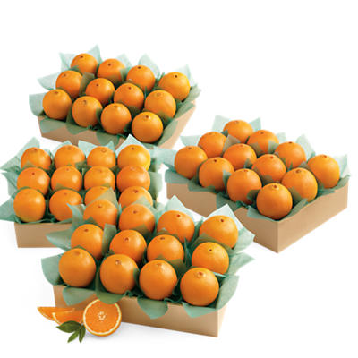 Navel Oranges Grand Family Size