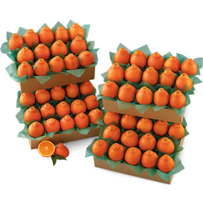 Western HoneyBells Large Family Size